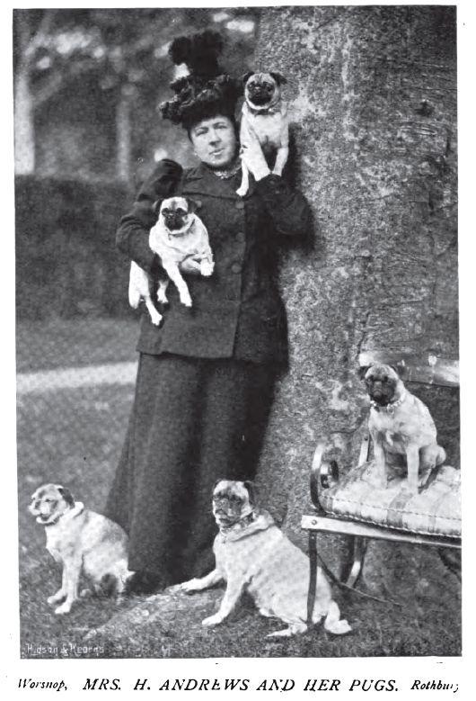 1897 Pugs Photo 1897 Pugs Mrshandrews Jpg Pugs Cute Pugs Pug