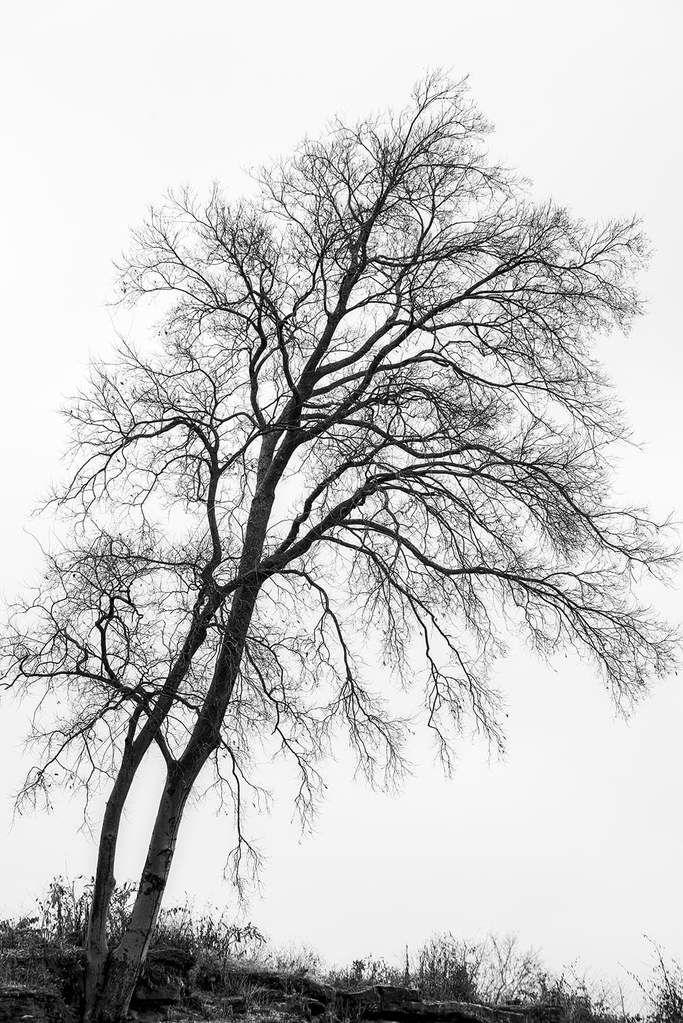 Black Trees Against A White Sky Fine Art Landscape Photograph Dsc00442 In 2020 Black White Landscape Black White Tree White Sky