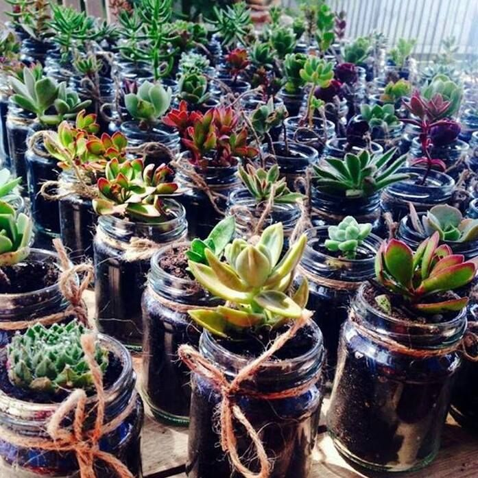 """Real Life Weddings Australia Jars by """"Just Jars"""" Mini succulent planted jars for guests...CUTE"""