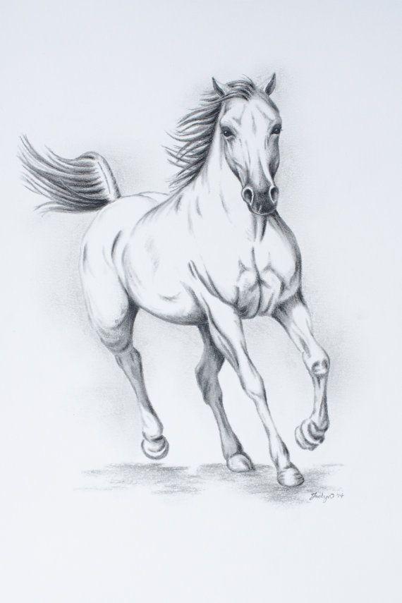 Sale Original Charcoal White Horse Sketch 11 X14 Horse