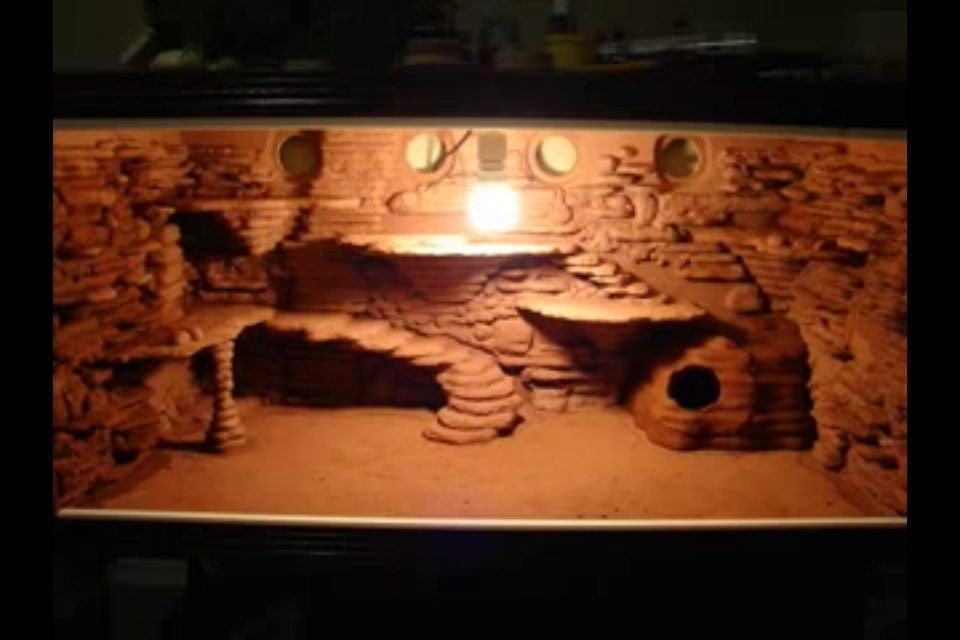 Diy Vivarium Custom Lighting Bearded Dragon Project