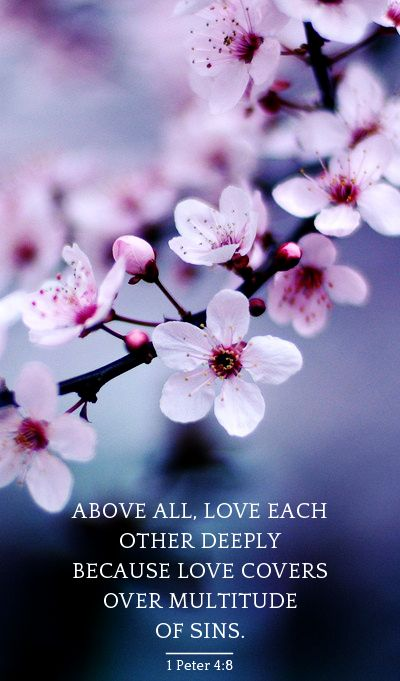cherry blossoms quotes love