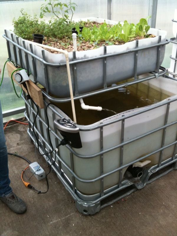 Blog urban fish farmer part 2 greenhouse pinterest for Hydroponic fish tank