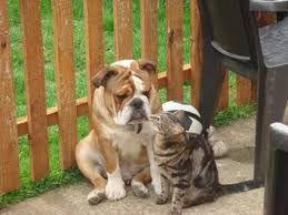 Resultado de imagen para can cats and dogs smile