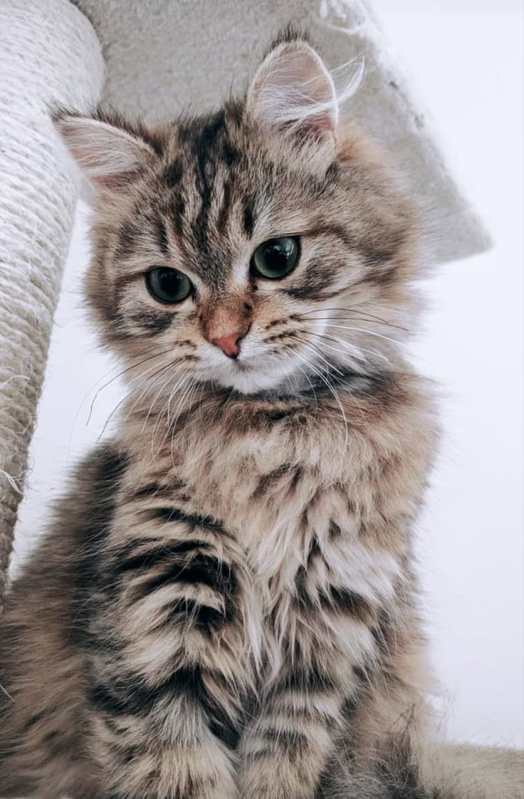 Pinterest Calliensmith Instagram Calliensmith Kittens Cutest