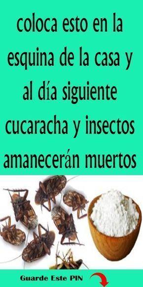 Rocía Esto Y En 2 Horas No Habrá Una Sola Mosca Cucaracha O Mosquito Favland Org Cleaning Hacks House Cleaning Tips Free To Use Images