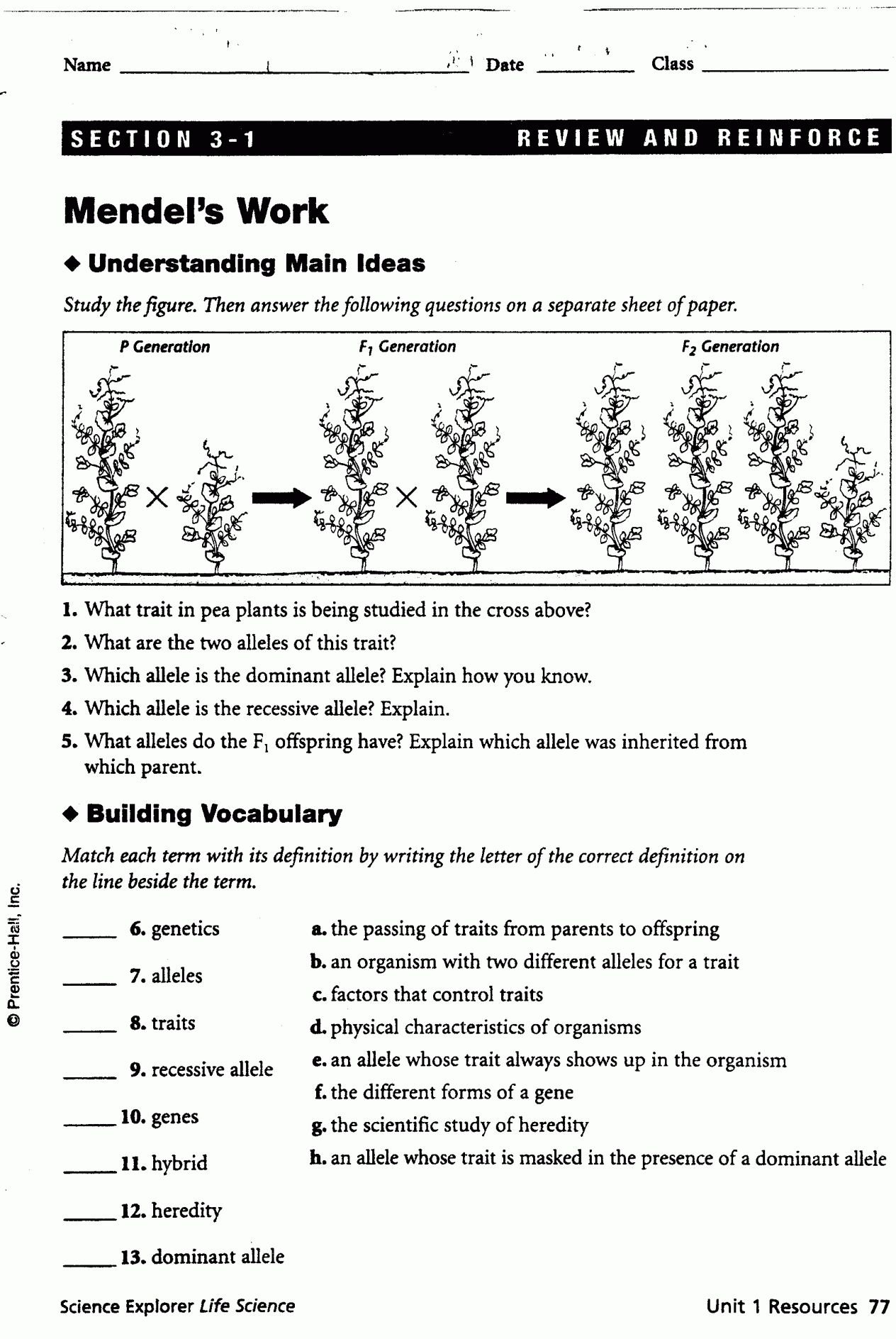 9 Mendel S Work Worksheet