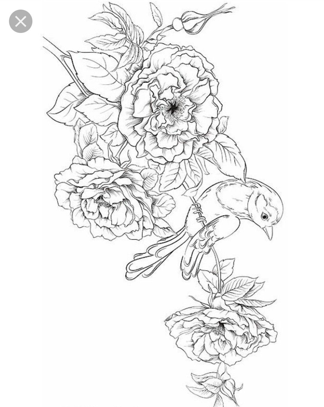 Adult Coloring Pages Image By Laci Spencer Bird Coloring Pages