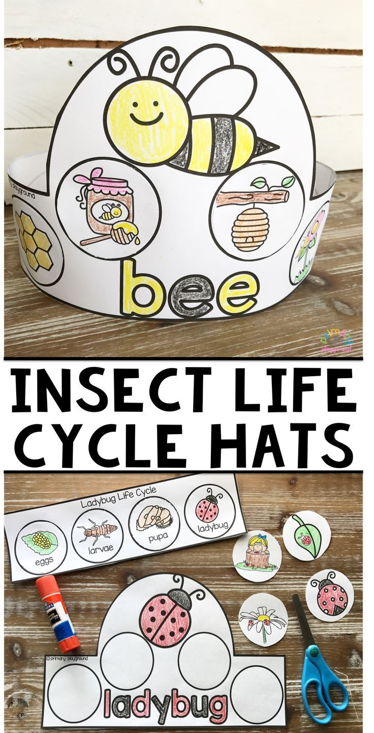 Pin on life cycles / bugs