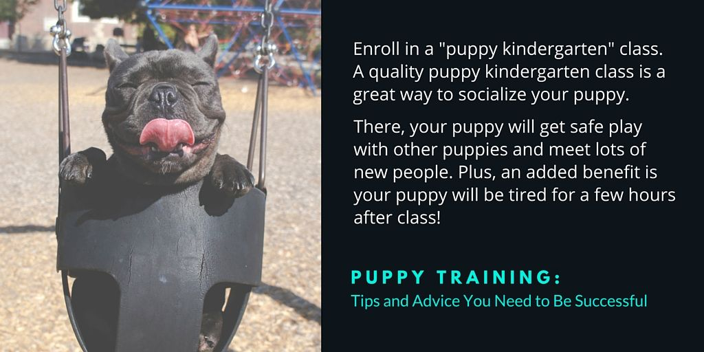 For more puppy training tips from trainers all over the U.S. download the free eBook! https://www.dogids.com/blog/puppy-training-tips-and-advice/ #puppytraining #dogtraining #lovedogs #ebook #free #trainers #dogs