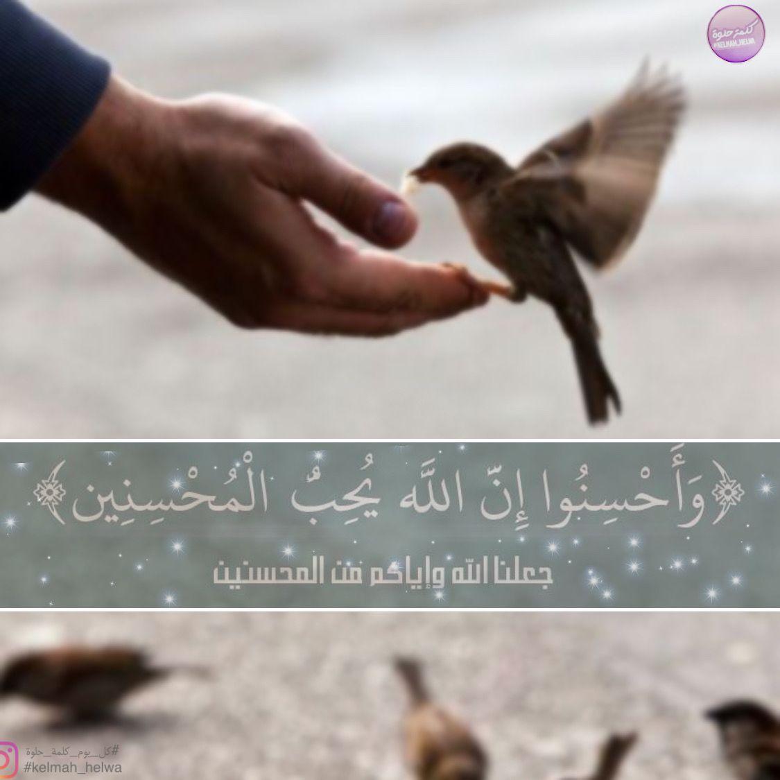 كل يوم كلمة حلوة Kelmah Helwa Instagram Photos And Videos Instagram Photo Instagram Photo And Video