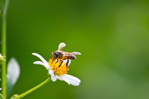 protect the bees In order to support actions on bee health, european commission designated   2013 - eu takes additional measures on fipronil to better protect europe's bees.