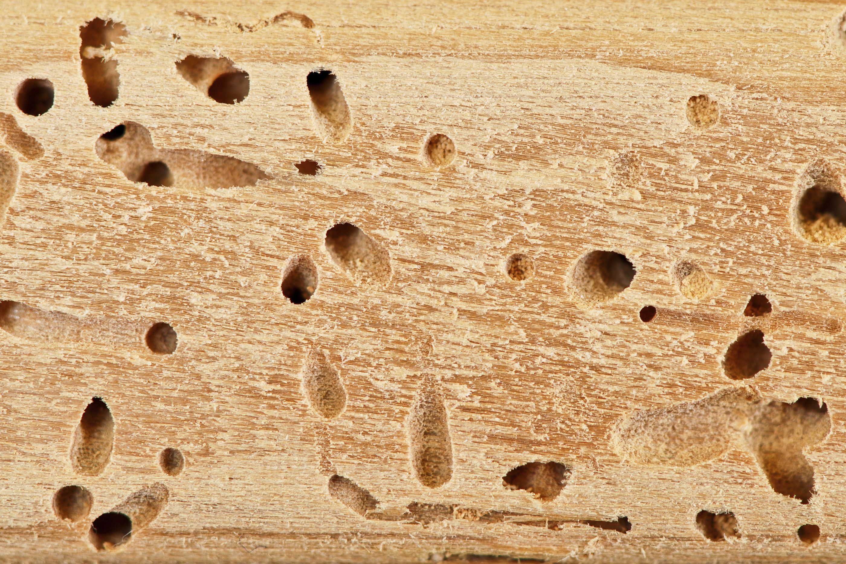 are these termite exit holes terminix blog get to know termites pinterest. Black Bedroom Furniture Sets. Home Design Ideas