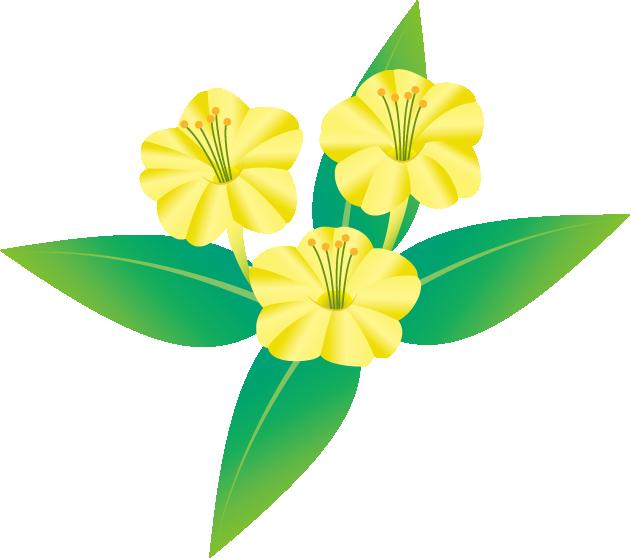 夏の花2 22 オシロイバナ 花の素材 イラストポップ 花のスケッチ 夏の花 イラスト