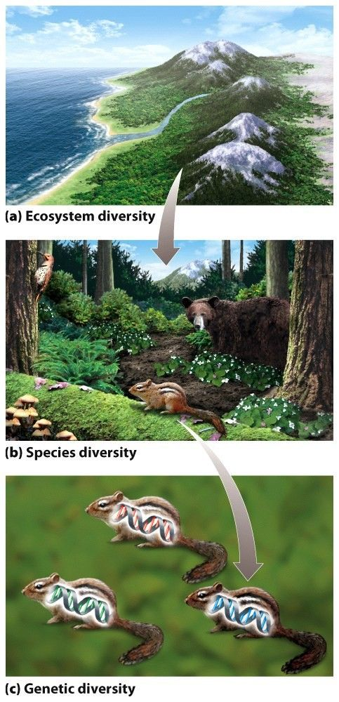 Levels of biodiversity  3 scales: a ) ecosystem diversity is