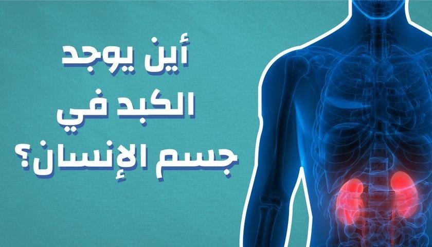 أين يوجد الكبد فى جسم الإنسان Neon Signs Neon