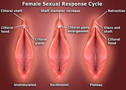 Sexual response in women
