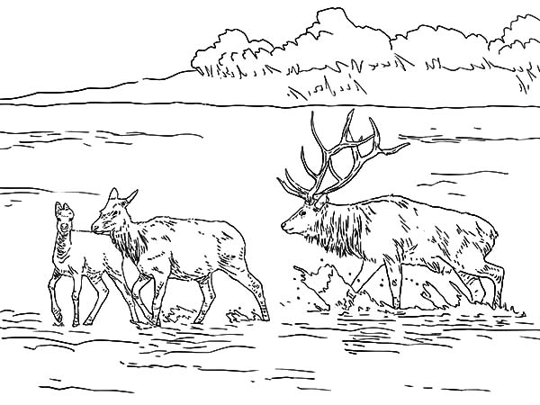 Elk In Shallow Lake Coloring Pages Download Print Online Coloring Pages For Free Color Nimbus In 2020 Coloring Pages Online Coloring Pages Online Coloring
