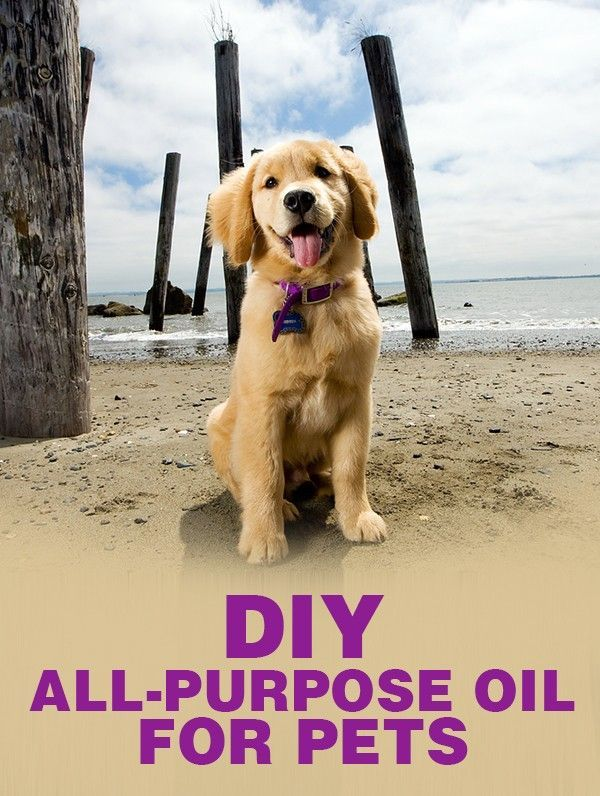 Diy All Purpose Oil For Pets Dogs Dog Food Recipes Diy Stuffed Animals