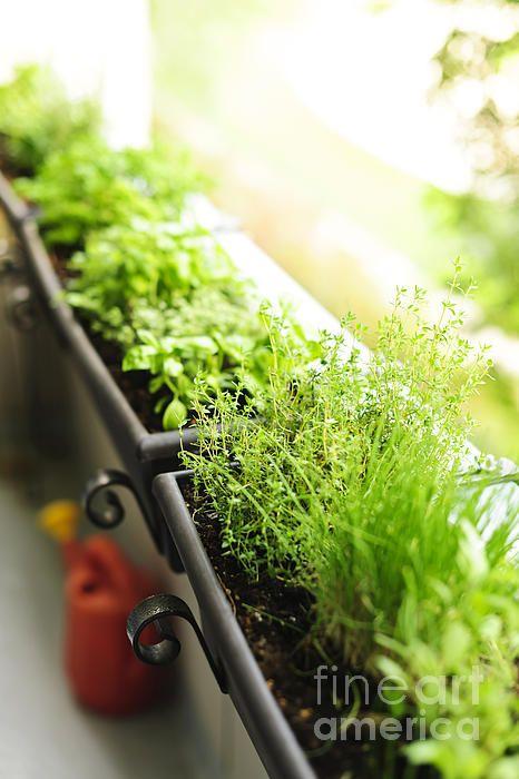 Balcony herb garden by Elena Elisseeva