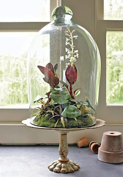 Planting Succulents In Glass Containers