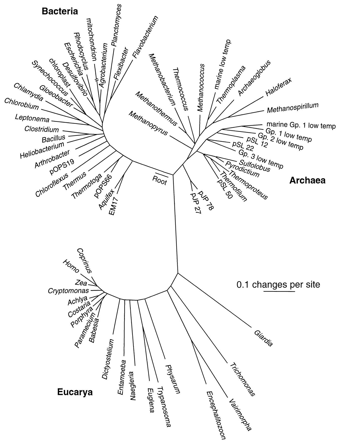 Universal Phylogenetic Tree Based On Ssu Rrna Sequences