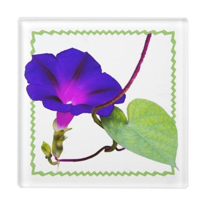 #floral - #Purple Morning Glory Floral Photography Cut Out Glass Coaster