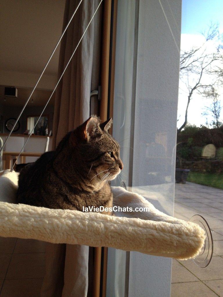 Hamac pour chat sur laviedeschats com