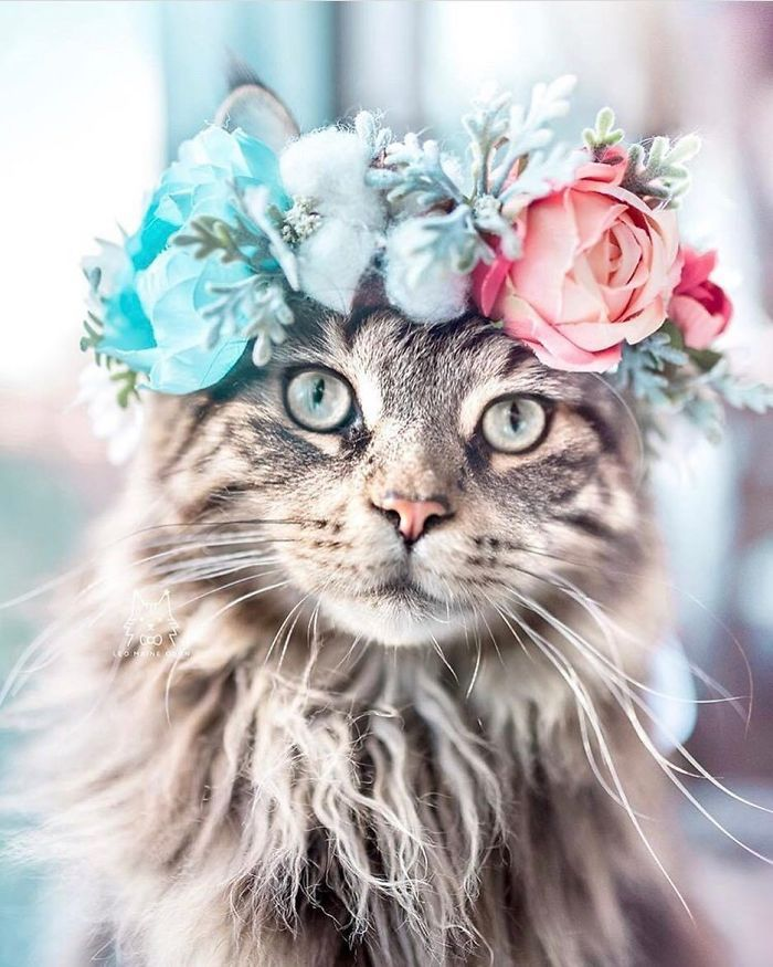 This Artist Is Making Flower Crowns For Animals And They Look Majestic #makeflowers