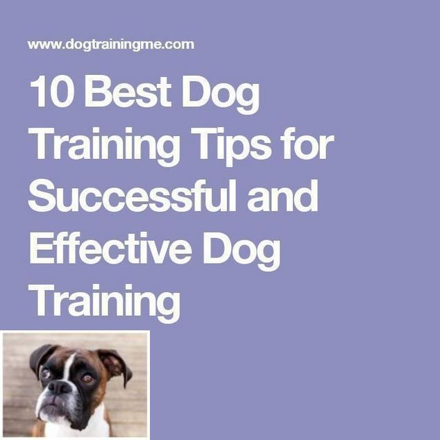 A How To Guide On Dog Obedience Training With Schedule 4549116616