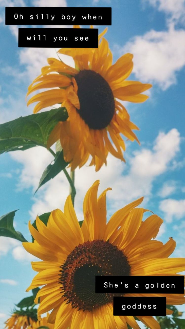 Pin by Kayla Bailey on Aesthetic | Sunflower wallpaper ...
