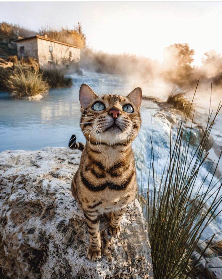 Pin by Jules Sargis on Animals Beautiful cats, Adventure