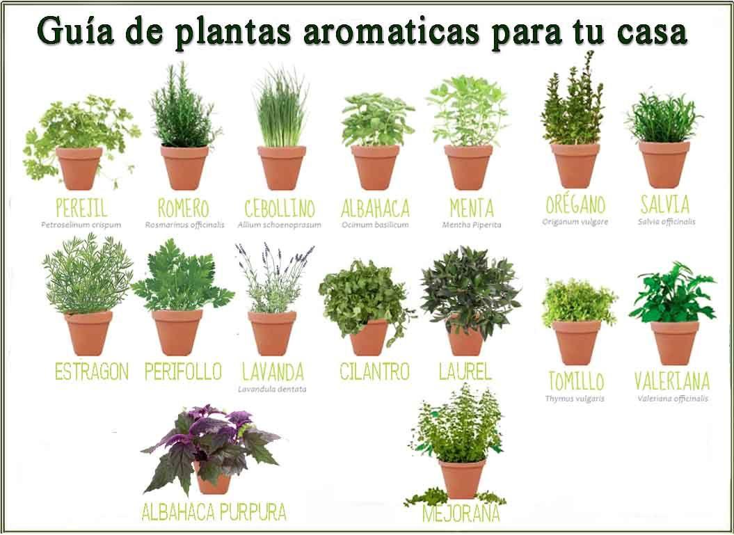 Gu a de plantas arom ticas que puedes tener con macetas en - Guia de jardineria ...