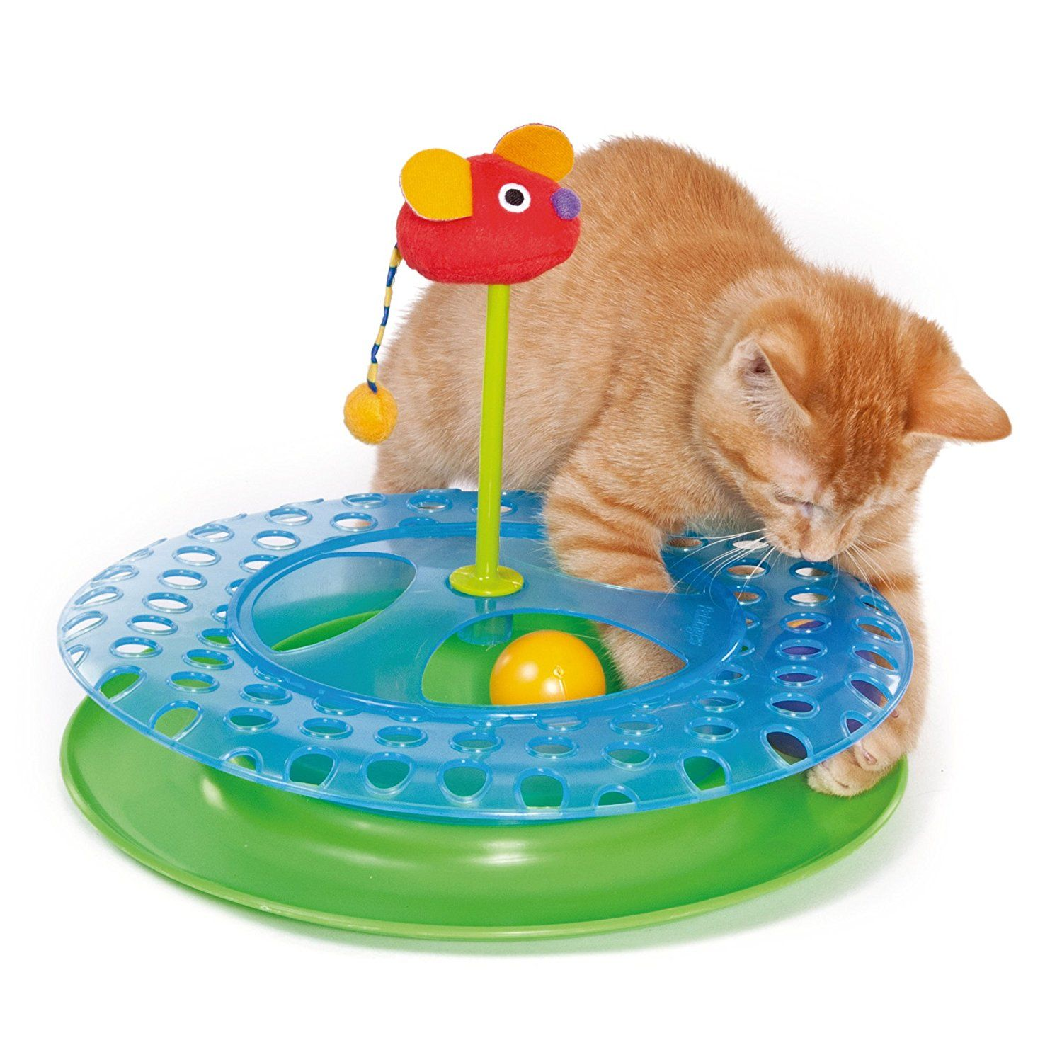 Bluehost Com Cat Playing Cat Toys Cat Lover Gifts