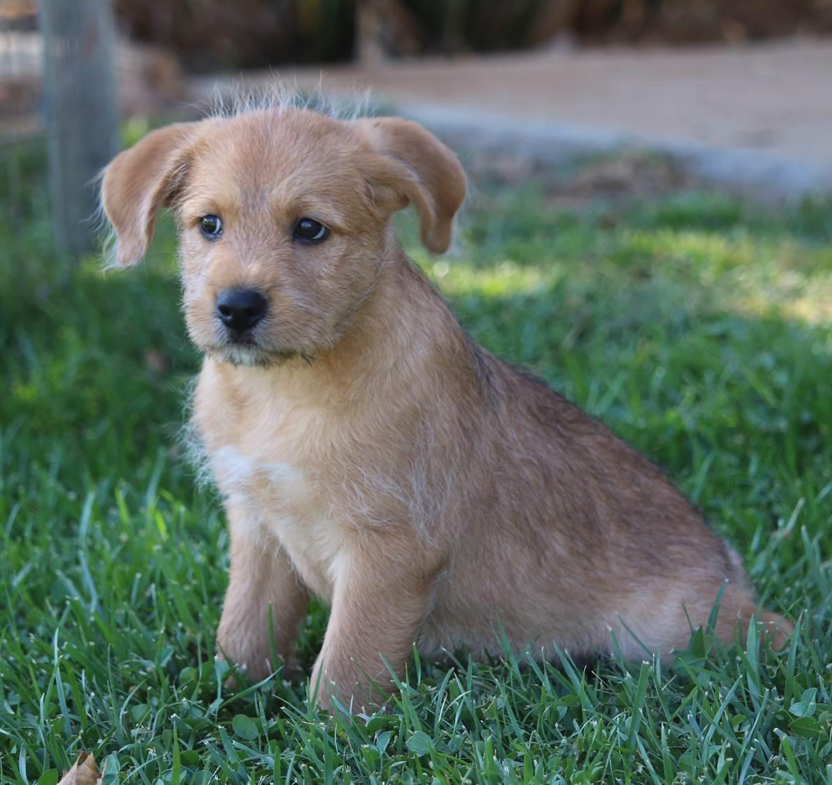 Adopt Landon On Dog Search Terrier Mix Dogs Shepherd Dog