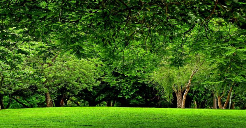 Environmental Monitoring Green Landscape Forest Wallpaper Forest Background