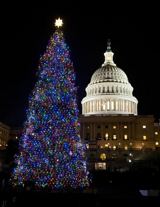 Christmas Time In Washington Dc.The White House Washington Dc Usa Christmas Trees Of