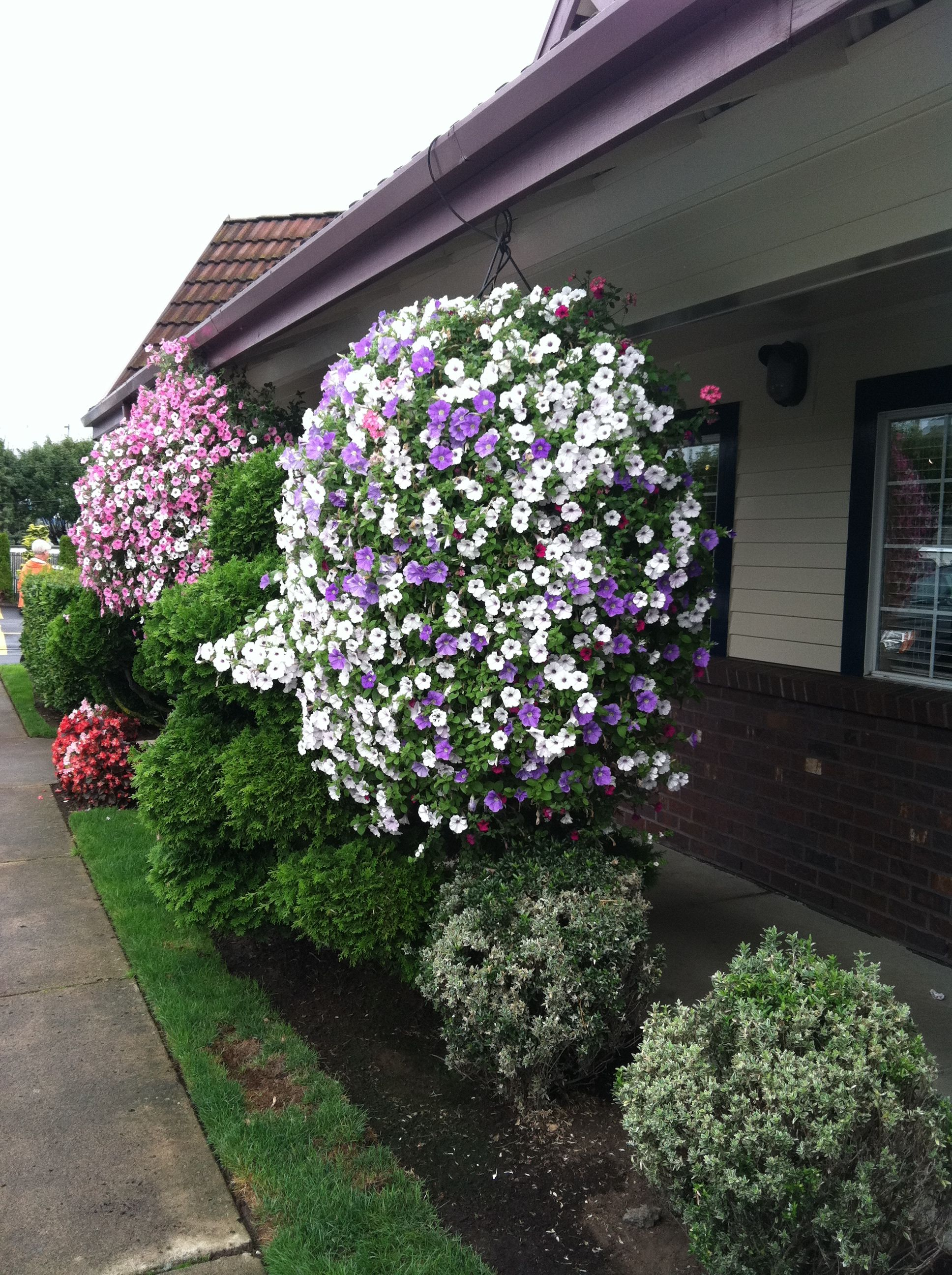Hanging flower baskets love putting these around my pool for Front porch hanging plants