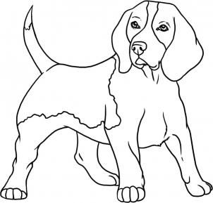 How To Draw A Beagle By Dawn Dog Drawing Dog Line Art Pet