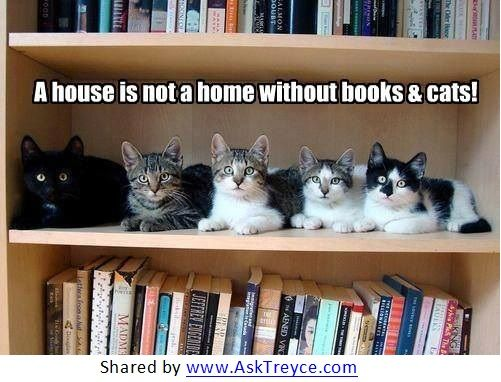 A House Is Not A Home Without Books And Cats 3 Crazy Cats