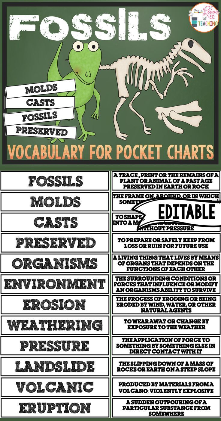 fossils pocket chart vocabulary editable home education dinosaurs vocabulary science. Black Bedroom Furniture Sets. Home Design Ideas