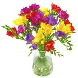 Freesias Delivered Freesia Flower Bouquets By Post Clare Florist Her Favourite Flowers Freesia Flowers Fresh Flower Bouquets Flower Delivery