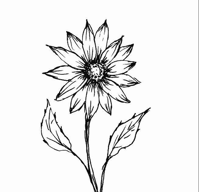 Terbaru 15 Gambar Bunga Matahari Dengan Pensil Sketsa Bunga Matahari 8 Pelajarindo Com Produk Gambar Bunga Menggambar Bunga Matahari Lukisan Bunga Matahari