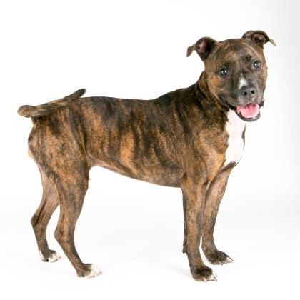 Kahlua is available for adoption at our Mission campus!