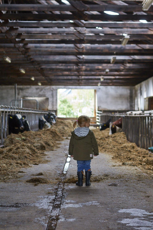 Wo Kommt Eigentlich Die Milch Her Kann Ich Auch Mal Reiten Und Was Machen Landwirte Im Internet Und Dann Gibt Es Auch Noch Eine Reise Zu Gewinnen Tasteshe Reiten Reisen Landwirtschaft
