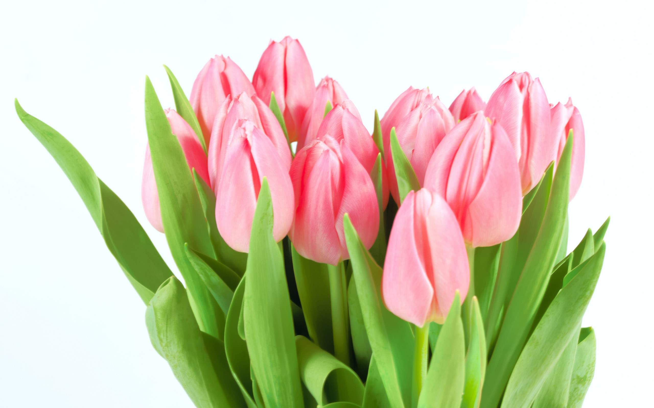 Beautiful tulip flowers flowers for every occassion pinterest beautiful tulip flowers izmirmasajfo