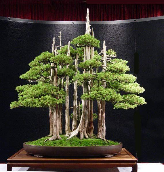 Bonsai Mas Caro árboles Bonsai Bonsais Bosque Bonsai