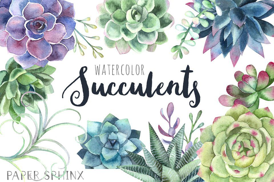 Watercolor Succulents Clipart Free Download On Behance Acuarela