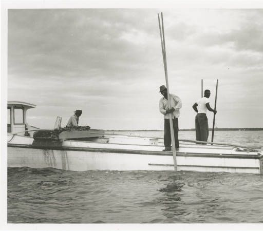 African American watermen using tongs to dig up oysters from Chesapeake Bay :: Orlando Wootten Photograph Collection - Nabb Research Center, Salisbury Univ.