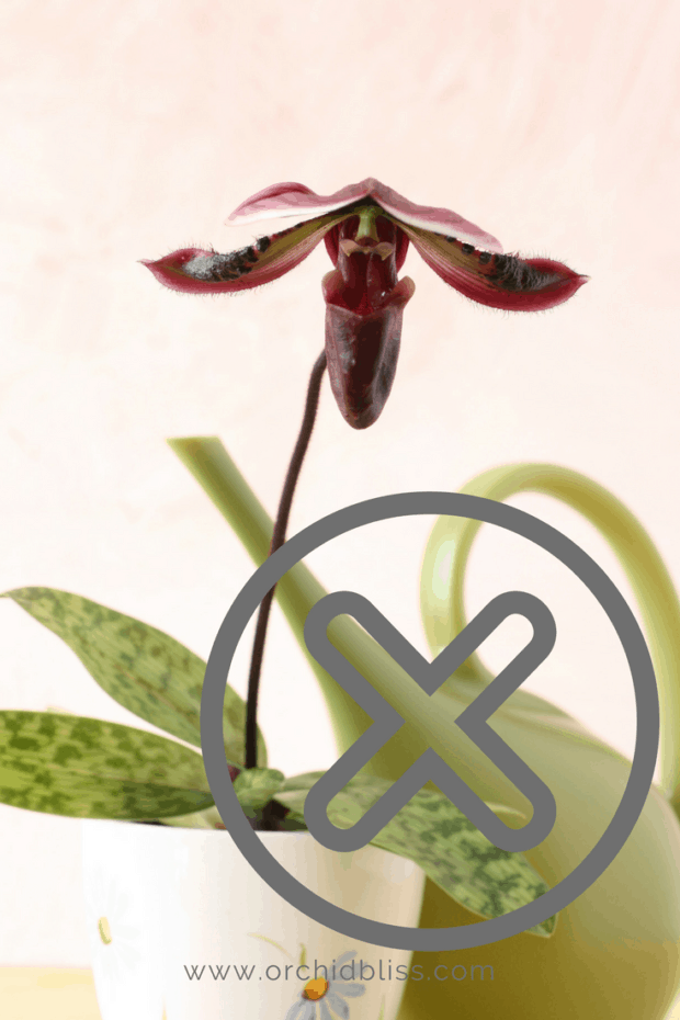 Photo of Learn How to ReBloom Orchids Step-by-Step – Orchid Bliss